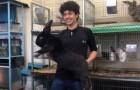 Un étudiant élève les plus grands lapins du monde : il veut