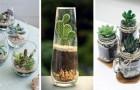 Micro-jardins dans des bocaux en verre : découvrez comment les créer avec les plantes grasses