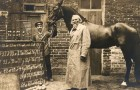 La curiosa storia di Hans, il cavallo intelligente che sapeva contare e