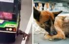Een buschauffeur maakt een extra stop om een verdwaalde hond op straat te redden - hij kon hem daar niet achterlaten