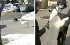 Cachorro para o trânsito na rua para pedir ajuda: a sua tutora tinha desmaiado de repente