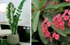 5 belles plantes d'intérieur qui doivent être arrosées très peu