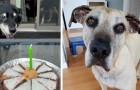 Auf andere Art jung: 16 Hunde, die alt geworden sind, aber nie ihren Glanz verloren haben