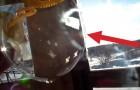 Il gonfle une bulle de savon pendant une journée glaciale: la MAGIE commence!
