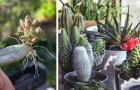 Tutti pazzi per le piante grasse: come coltivarle al meglio e gli errori più comuni da evitare