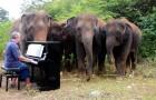 L'emozionante storia del pianista che suona agli elefanti: la musica li aiuta a stare meglio