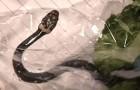 Eine Frau findet eine Schlange in der Salatpackung, die sie im Supermarkt gekauft hat