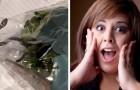 Uma mulher encontra uma cobra viva dentro da sacola de salada que comprou no supermercado