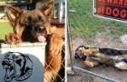 """15 minacciosi animali da guardia che si nascondono dietro al cartello """"attenti al cane"""""""