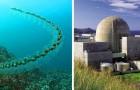Hunderte von Meeresbewohnern schließen sich zu langen Ketten zusammen und blockieren die Reaktoren eines Atomkraftwerks