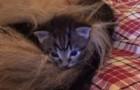 Hij neemt 4 wees katjes mee naar huis, maar weet niet dat iemand op het punt staat ze te adopteren
