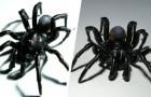 Scoperta in uno zoo una nuova specie di ragno velenoso simile alla tarantola: è tra le più longeve
