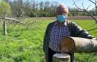 12 walnotenbomen van een boomkweker werden 's nachts gekapt: