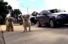 Estos dos perros vagabundos nos muestran el verdadero significado del amor y de la lealtad