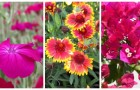 Non avete tempo per annaffiare? Scoprite 10 fantastiche piante che richiedono pochissima acqua