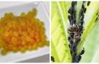 Insetti sulle piante? Scopri come allontanarli col sapone giallo di potassio