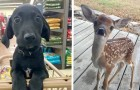 Demasiado lindos para ser verdad: 16 animales tan dulces que parecen haber salido de un dibujo animado