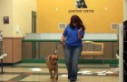 This is what happens in this rescue center when a dog is adopted...