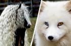 Wanneer de realiteit de fantasie overtreft: 15 dieren die Moeder Natuur uniek in hun soort heeft gemaakt
