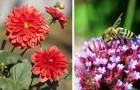 Le piante più belle per attrarre api e farfalle in giardino o in terrazzo