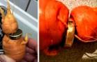 Un anziano ritrova la fede nuziale su una carota, dopo 3 anni: il suo orto gli ha restituito il frutto più prezioso