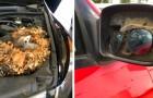 14 mecánicos que se agarraron la cabeza cuando vieron el auto de sus clientes