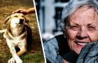 Une femme âgée laisse son héritage de 4,3 millions d'euros à la cause animale : presque rien à sa famille