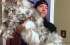Rapiscono un gatto ma poi lo restituiscono alla proprietaria: mangiava troppo