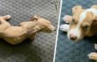 Coppia nutre due cuccioli con una dieta vegana: multati e banditi dal possesso di animali