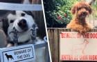 """""""Vorsicht, bissiger Hund. Betreten auf eigene Gefahr"""": 15 Hunde, die in Wahrheit keiner Fliege etwas zuleide tun würden"""