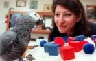 Vídeo de Papagaios