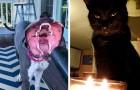 15 Mal haben sich Besitzer über das Aussehen ihrer Haustiere erschrocken