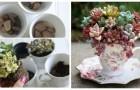 Plantes grasses dans des tasses ? Nous vous expliquons comment créer ces compositions originales et irrésistibles