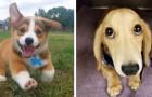 15 cachorros doces e que não se dão conta que têm carinhas irresistíveis