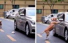 En respektlös bilförare kastar papper från bilrutan, men en förbipasserande hund ger honom en läxa