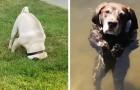 """""""Il mio cane è rotto"""": 16 padroni hanno condiviso le immagini dei loro cani malfunzionanti"""