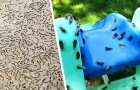 USA: Milliarden von Zikaden kommen nach 17 Jahren wieder aus dem Boden, das Schauspiel ist beeindruckend