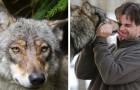 Han räddar en varg från en fälla och ger hennes ungar mat - några år senare kommer den tillbaka för att hälsa på