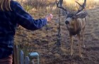 They see a deer in danger. But it won't be very easy to help it