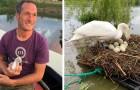 Il construit un radeau pour sauver le nid de deux malheureux cygnes :