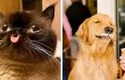 Questa pagina Facebook condivide foto di animali che meritano di essere viste