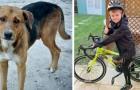 Bimbo di 8 anni percorre 160 km in bici per regalare una casa ai cani randagi