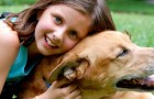 Niña de 12 años es perseguida por un atacante: el perro la salva agrediendo al hombre