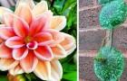 Merveilles botaniques : 17 plantes insolites que des personnes ont décidé d'immortaliser