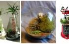 Terrari fai-da-te: le idee per crearli con vecchi oggetti rotti e dimenticati