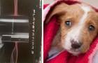 Vende la Playstation per pagare una costosa operazione alla sua cagnolina investita da un'automobile