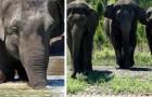 Liberano 35 elefanti da un circo e assegnano loro una nuova casa nella natura: uno spettacolo che fa bene al cuore