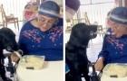 Il cane aiuta la padrona tetraplegica a mangiare grazie ad un cucchiaio speciale: non può muovere le mani