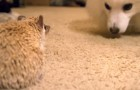 2 new friends get to know each other: unusual but incredibly CUTE !