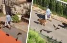 Donna misteriosa cammina per strada seguita da cani, gatti ed uccelli: sembra una scena uscita da una fiaba